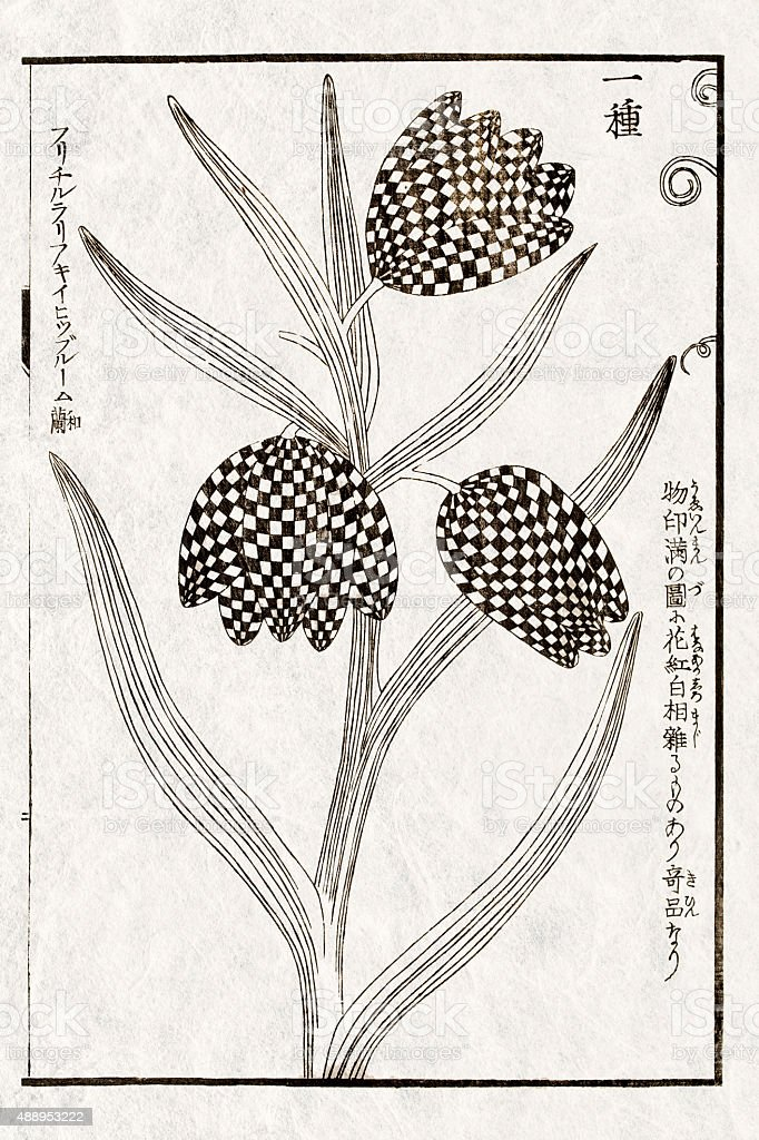 Japanese botanical illustration, 19 century vector art illustration