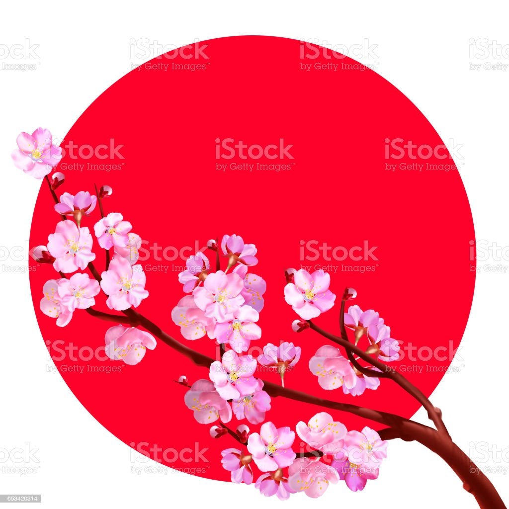 japanese cherry blossom on the background of the japanese flag