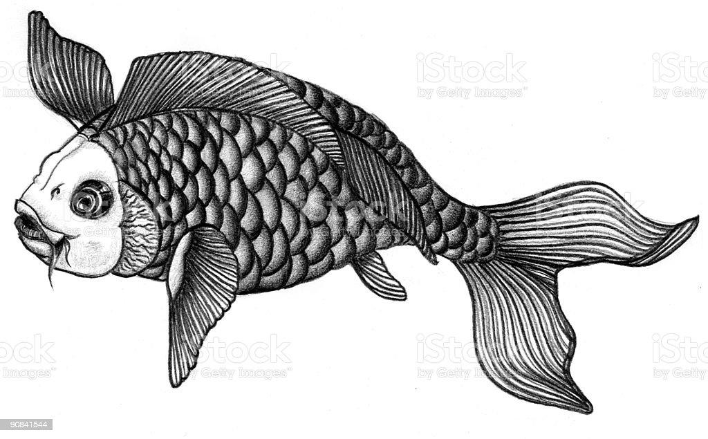 Ilustración de Peces Koi Japonesesgraphite Lápiz Ilustración y más ...