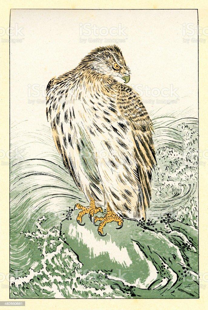 Japanese Sea Eagle - Osprey vector art illustration
