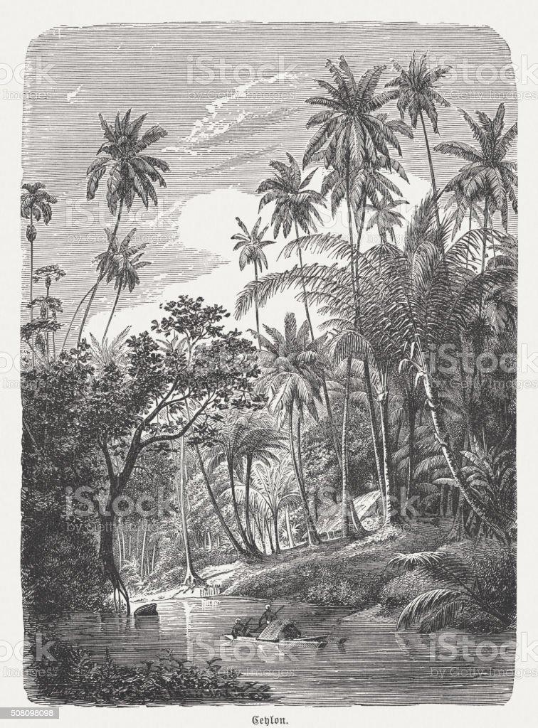 Jungle landscape in Sri Lanka (Ceylon), wood engraving, published 1882 vector art illustration