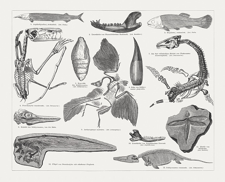 Jurassic fossils, wood engraving, published in 1897