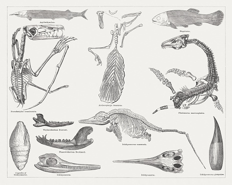 Jurassic fossils, wood engravings, published in 1876