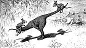 Kangaroo Swing - 1896