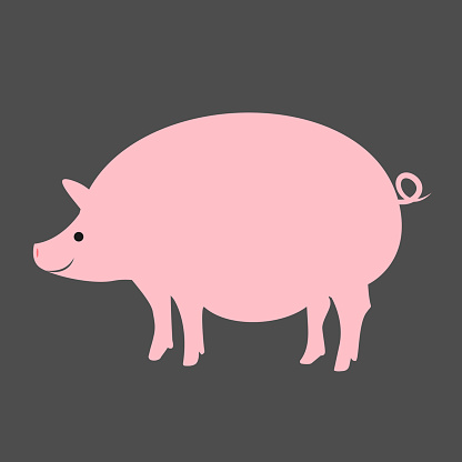 Kawaii chubby pig illustration