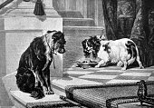 King Charles dog defends his food from a homeless dog - 1888