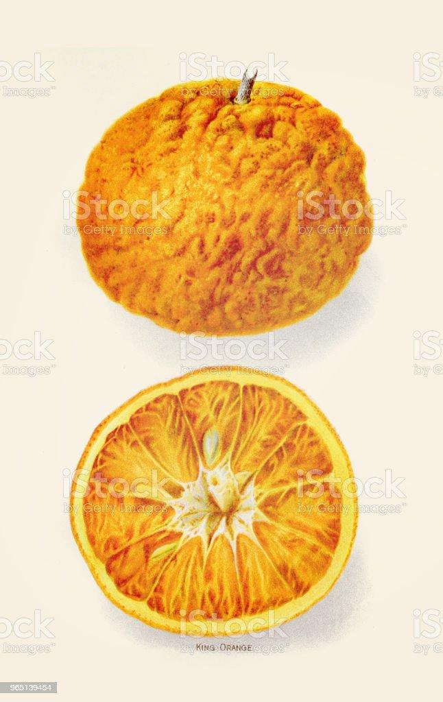 King orange illustration 1892 king orange illustration 1892 - stockowe grafiki wektorowe i więcej obrazów antyczny royalty-free
