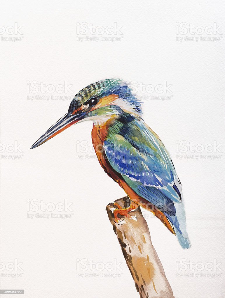 Kingfisher, Alcedo atthis royalty-free stock vector art