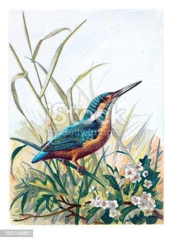 istock Kingfisher Chromolithograph 155446862