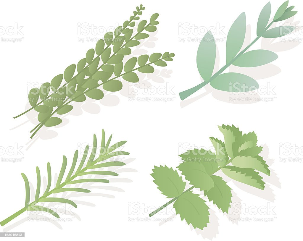 Kitchen herbage! royalty-free kitchen herbage stock vector art & more images of botany