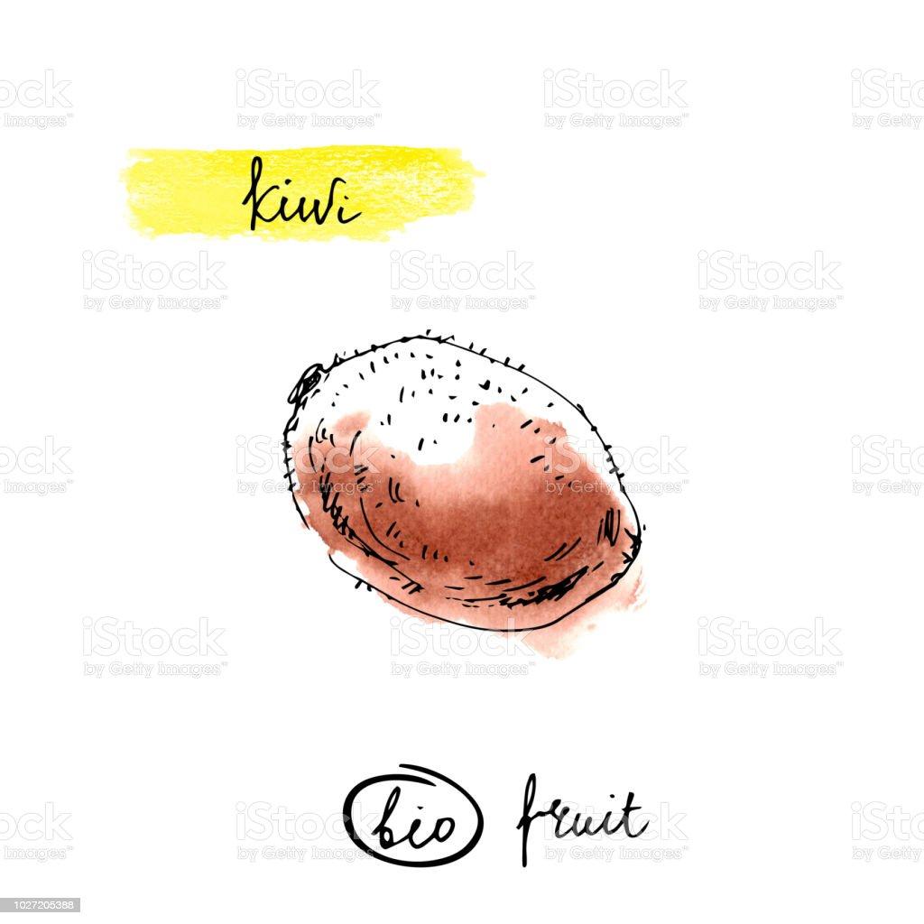 Kiwi Mit Schriftzug Namen In Brauner Farbe Isoliert Auf Weissem