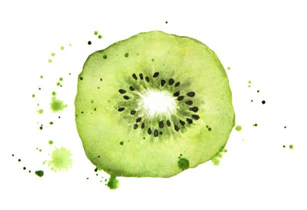 bildbanksillustrationer, clip art samt tecknat material och ikoner med kiwi segmentet med stänk isolerade på vit bakgrund. akvarell mat illustration, konst måleri - kivik
