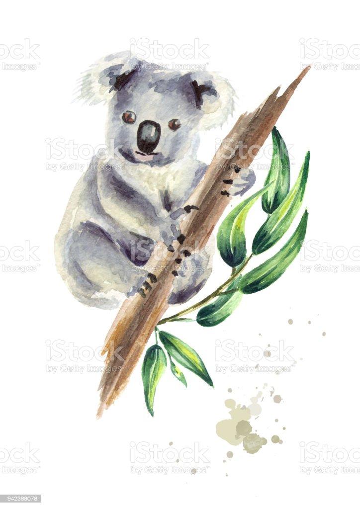 Ilustración de Oso Koala Sentado En La Rama De Eucalipto Aislada ...