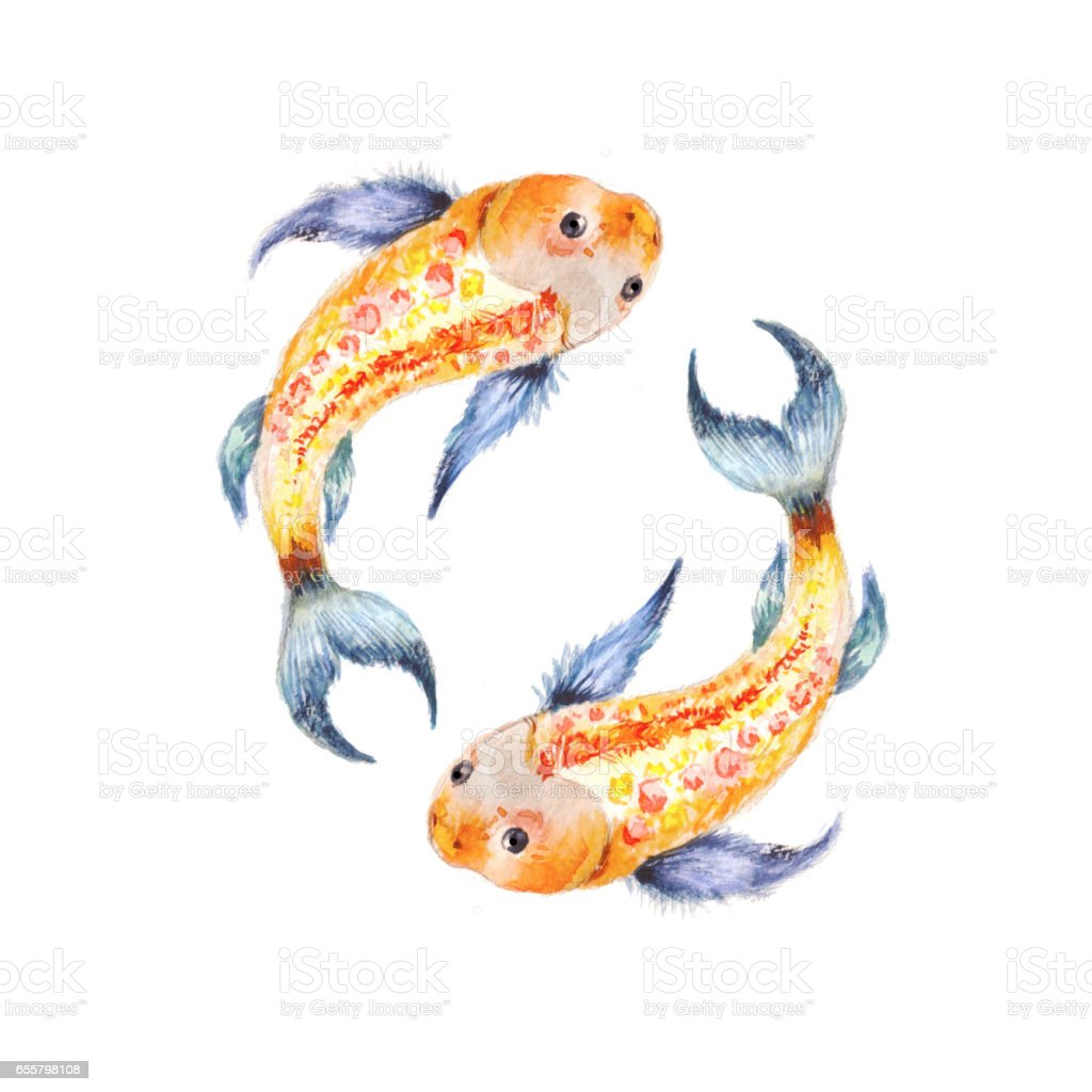 Koi Fish Yin Yang Symbol Watercolor Illusration Isolated On White