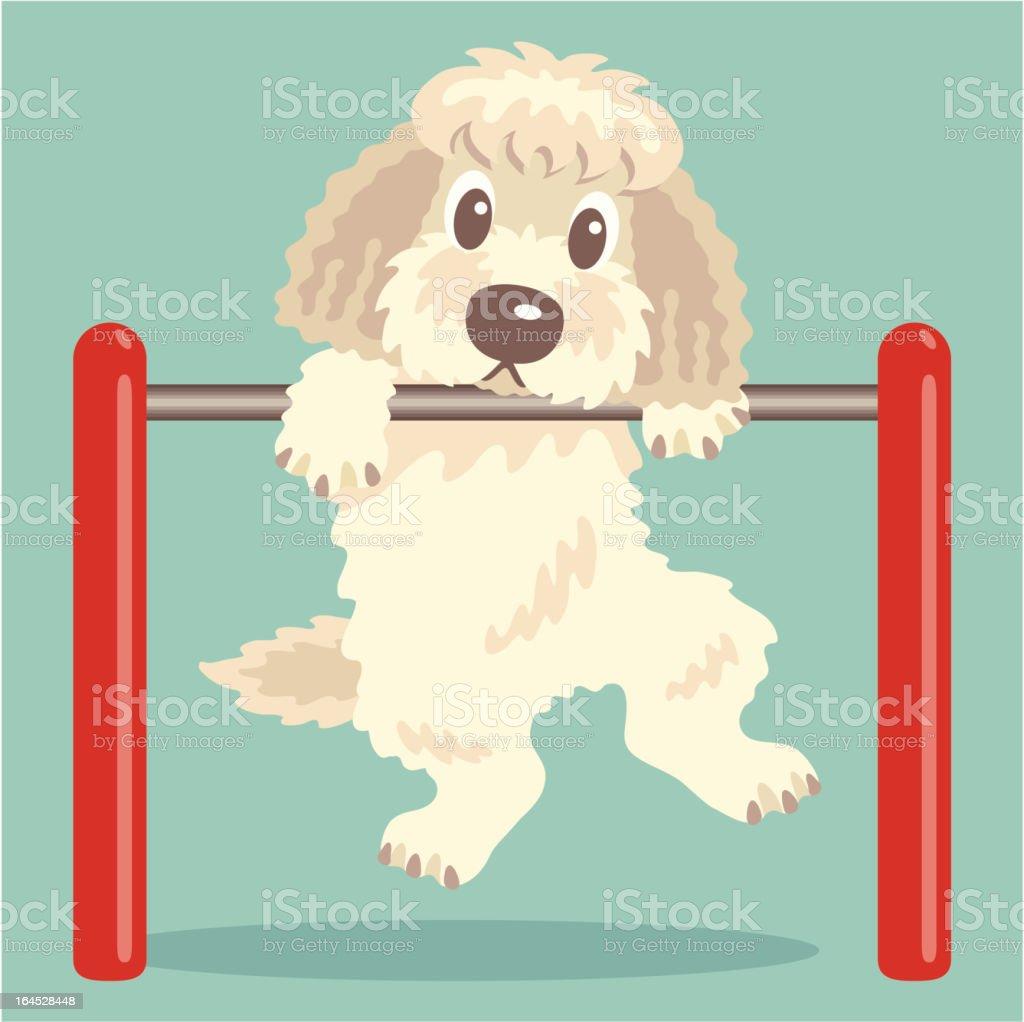 Labradoodle,Goldendoodle exercise vector art illustration