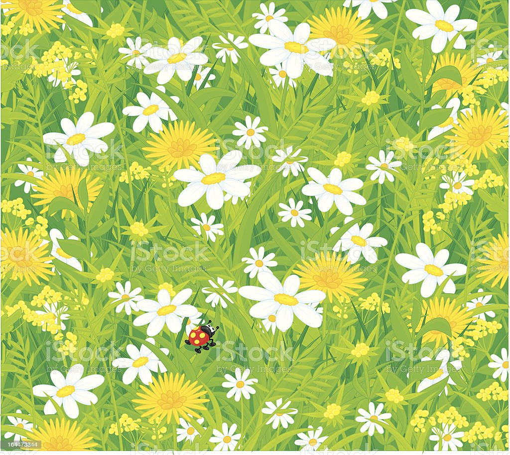 Ladybug and field flowers royalty-free stock vector art