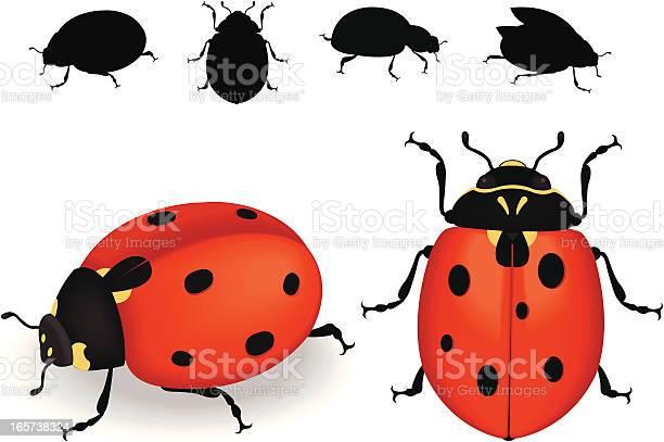 Ladybug illustration id165738324?b=1&k=6&m=165738324&s=612x612&h=pby5zdy70fczguqopjgj0jf38k1 hfmcmus2nrenqyw=