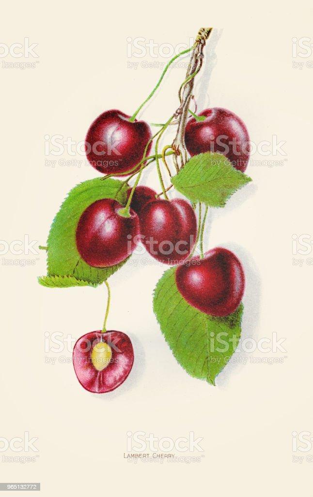 Lambert cherry illustration 1892 royalty-free lambert cherry illustration 1892 stock vector art & more images of 19th century style