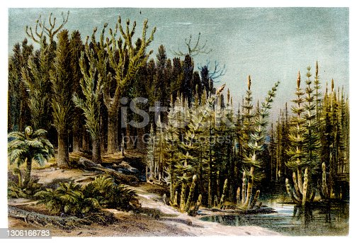 Landscape of the Coal Period. View of the prehistoric landscape of the Karbon with trees and ferns at a lake