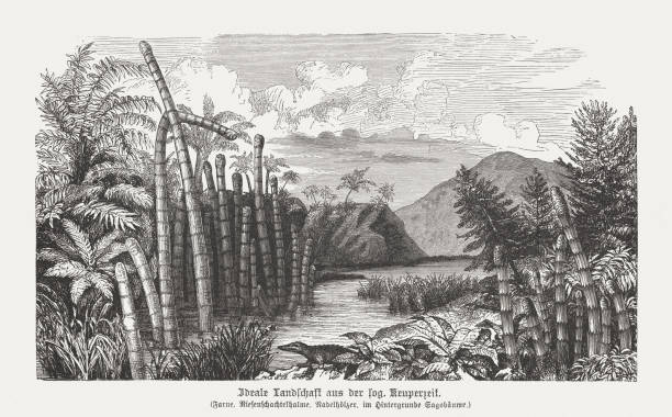 landscape of the keuper period (about 220 million years ago) - fossilized leaves stock illustrations