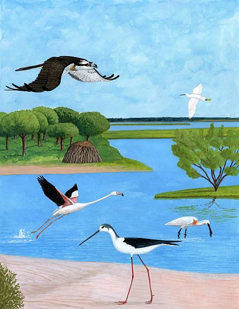 ilustrações de stock, clip art, desenhos animados e ícones de paisagem com pássaros e árvores em um pântano - estuário
