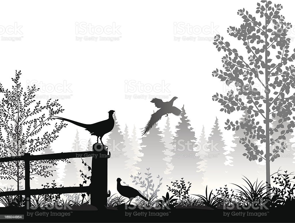 Landscape with pheasants royalty-free stock vector art