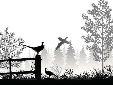 Landscape with pheasants