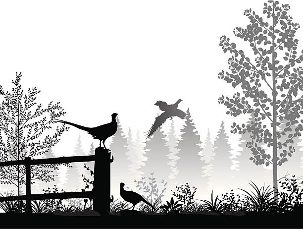 stockillustraties, clipart, cartoons en iconen met landscape with pheasants - roofdieren