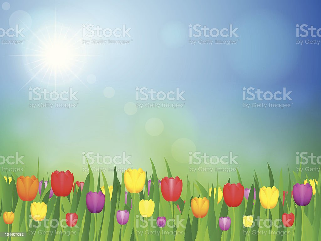 landscape with tulip royalty-free stock vector art