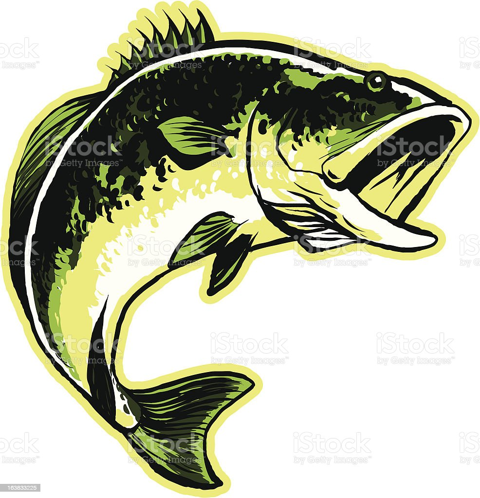 Largemouth Bass A largemouth bass in mid-leap. Animal stock vector