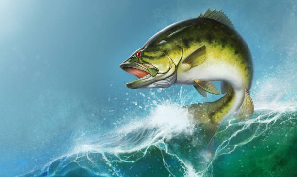 19 Background Of The Largemouth Bass Wallpapers Illustrations Royalty Free Vector Graphics Clip Art Istock