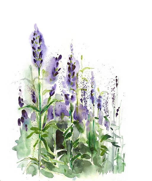Lavender field watercolor, paper, 2012, artist Marina Grau lavender color stock illustrations