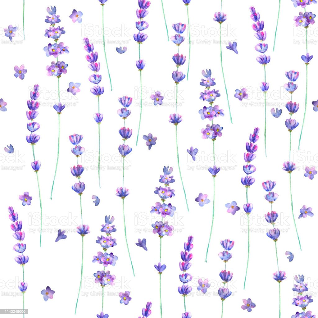 Lavender Flowers Watercolor Seamless Pattern On White Background