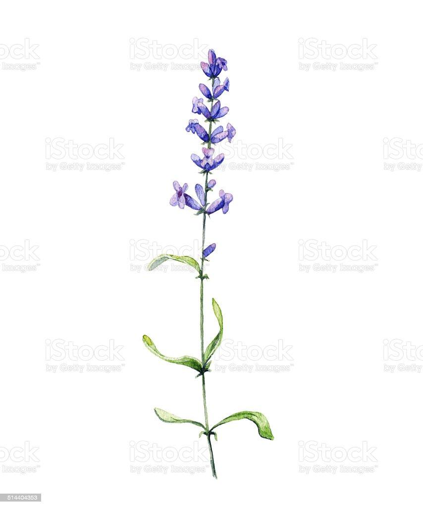 royalty free lavender clip art vector images illustrations istock rh istockphoto com Lavender Sprig Arch Clip Art Lavender Sprig Arch Clip Art