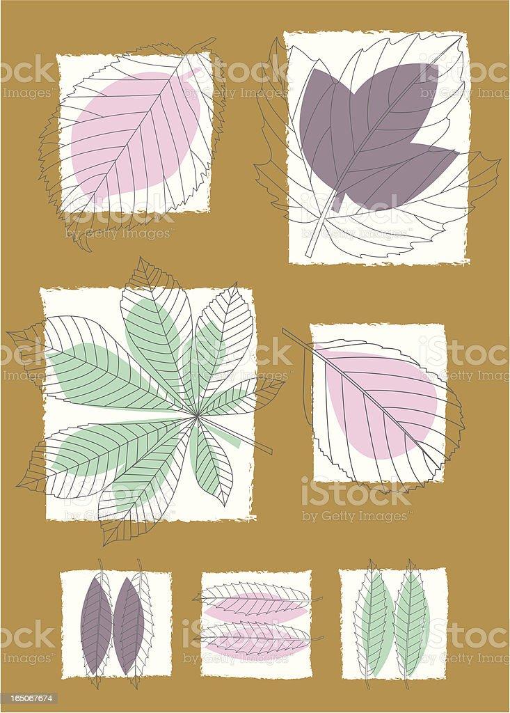 Leaf veins royalty-free stock vector art