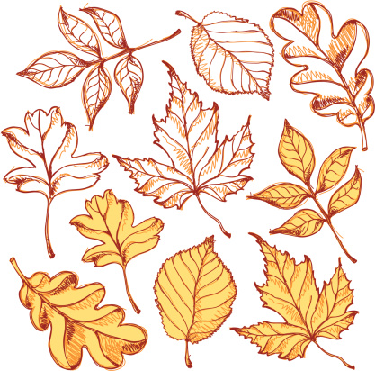 A set of different leafs. (includes jpg)