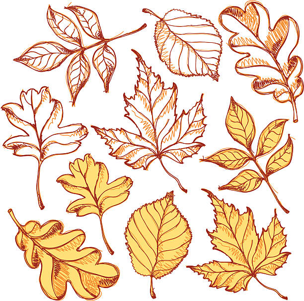 leafs - image stock illustrations