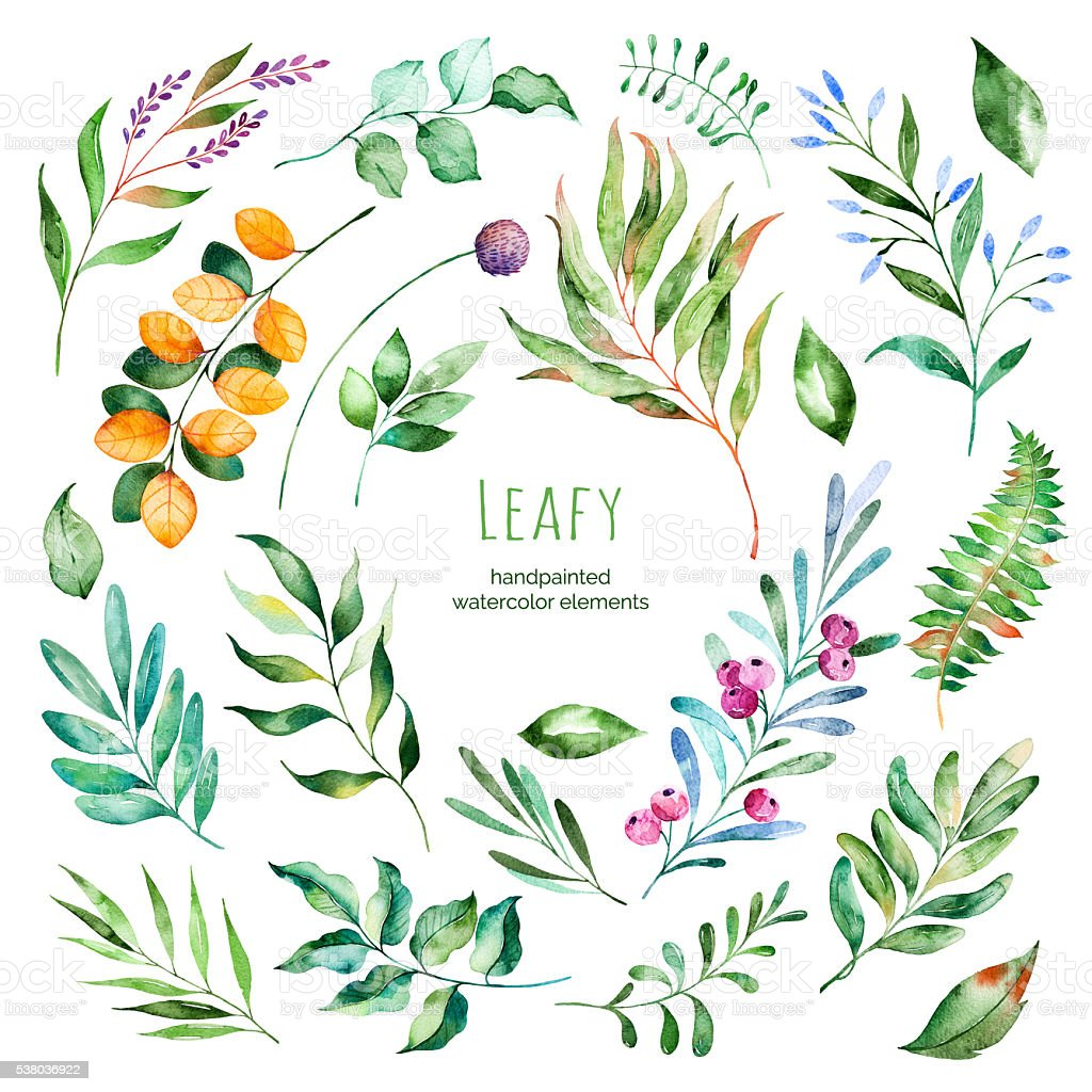 Leafy collection.22 Handpainted watercolor floral elements.Watercolor leaves, branches vector art illustration