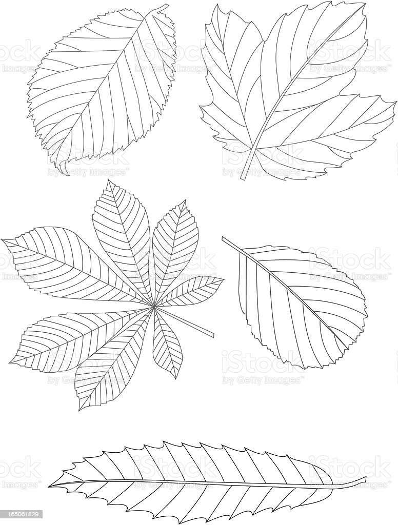 Leaves royalty-free stock vector art