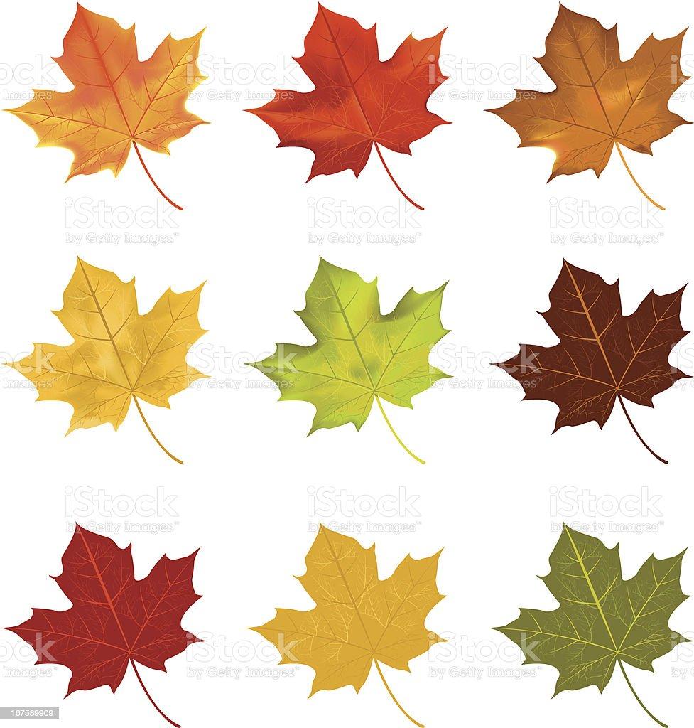 Blätter – Vektorgrafik