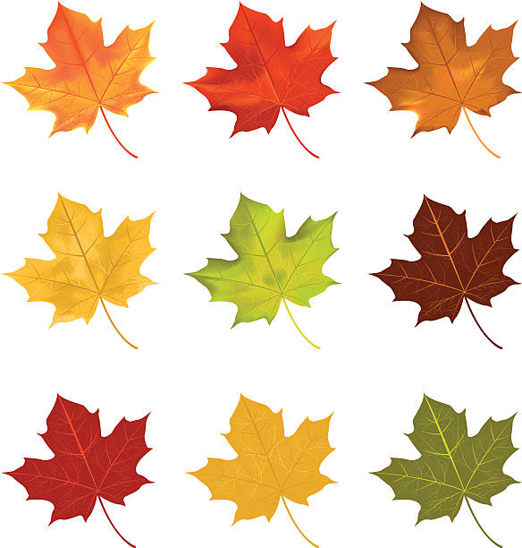 leaves vector file of leaves maple leaf stock illustrations