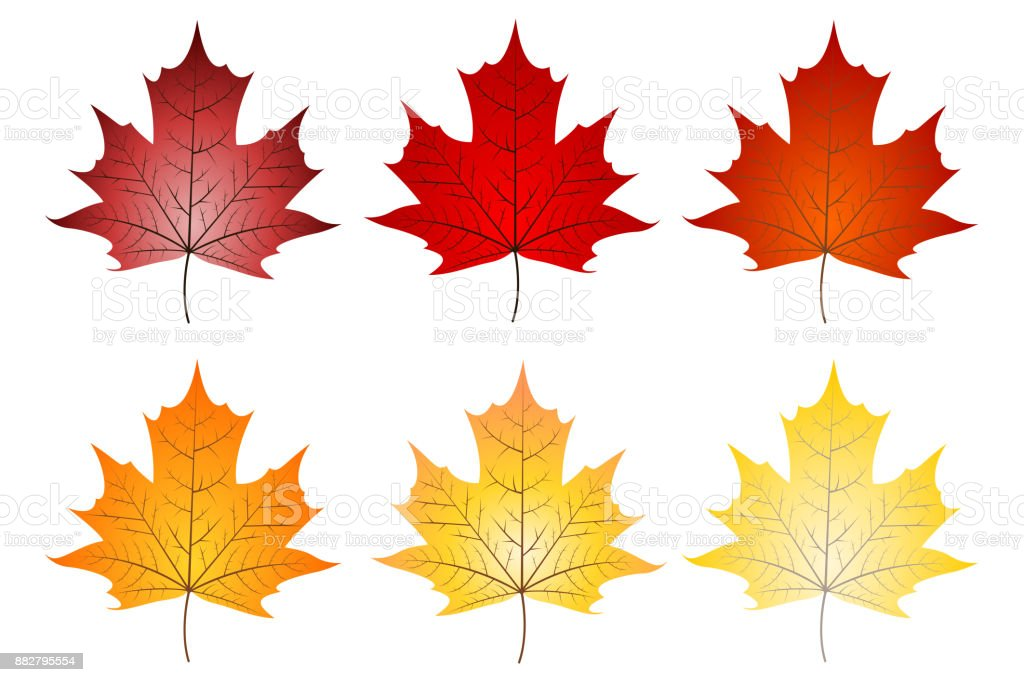 Leaves illustration vector art illustration