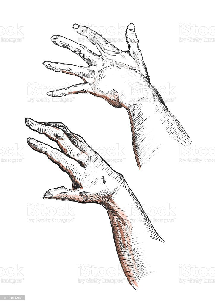 Left Right Hand Drawn Human Palms Fingers Muscles Tendons Arms Stock