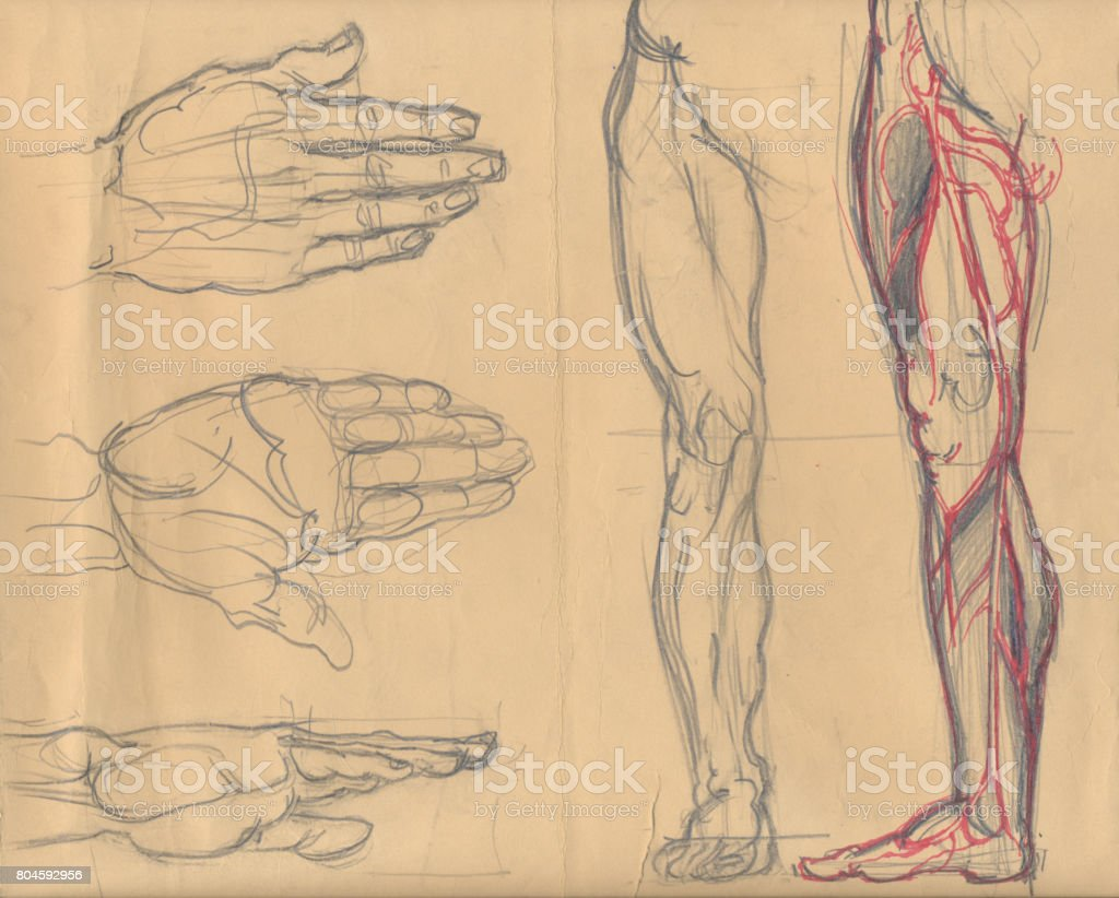 Leg and palm sketches vector art illustration