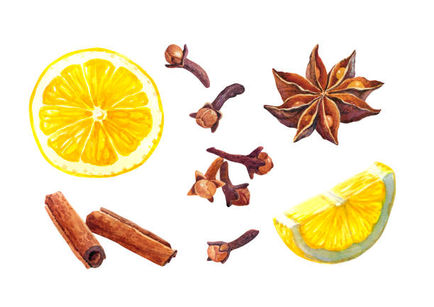 Lemon and winter spices isolated on white watercolor illustration vector art illustration