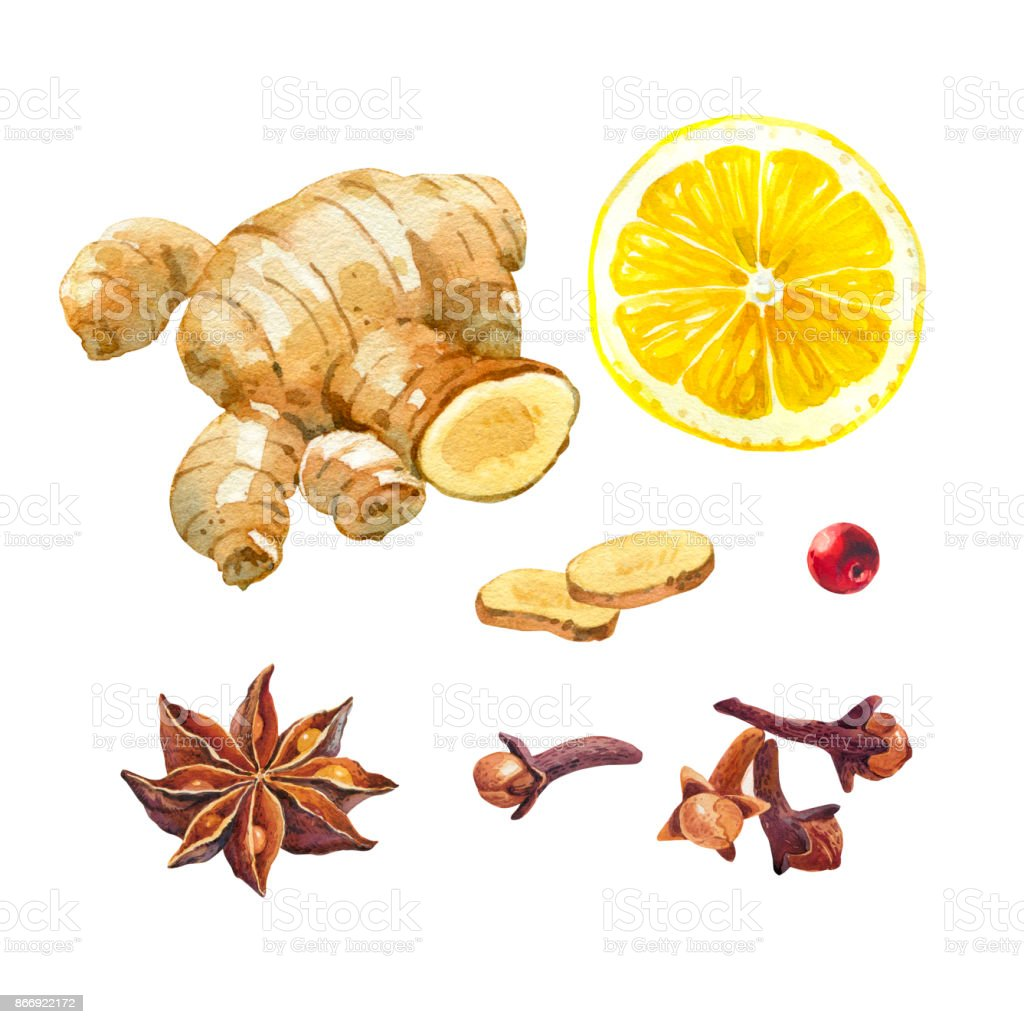 Lemon, giger and winter spices isolated on white watercolor illustration set vector art illustration