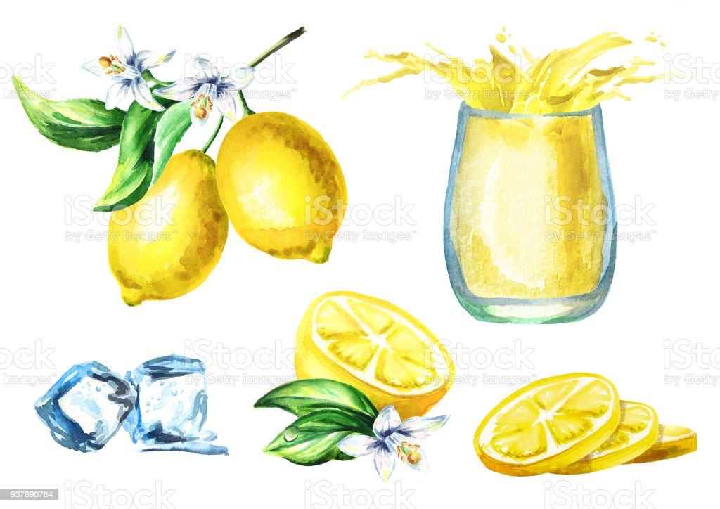 Ilustracin de Jugo De Limn Con Salpicaduras En El Cristal Frutas Y