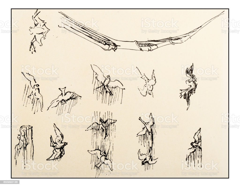 Leonardos Sketches And Drawings Birds Flying Stock Vector Art More