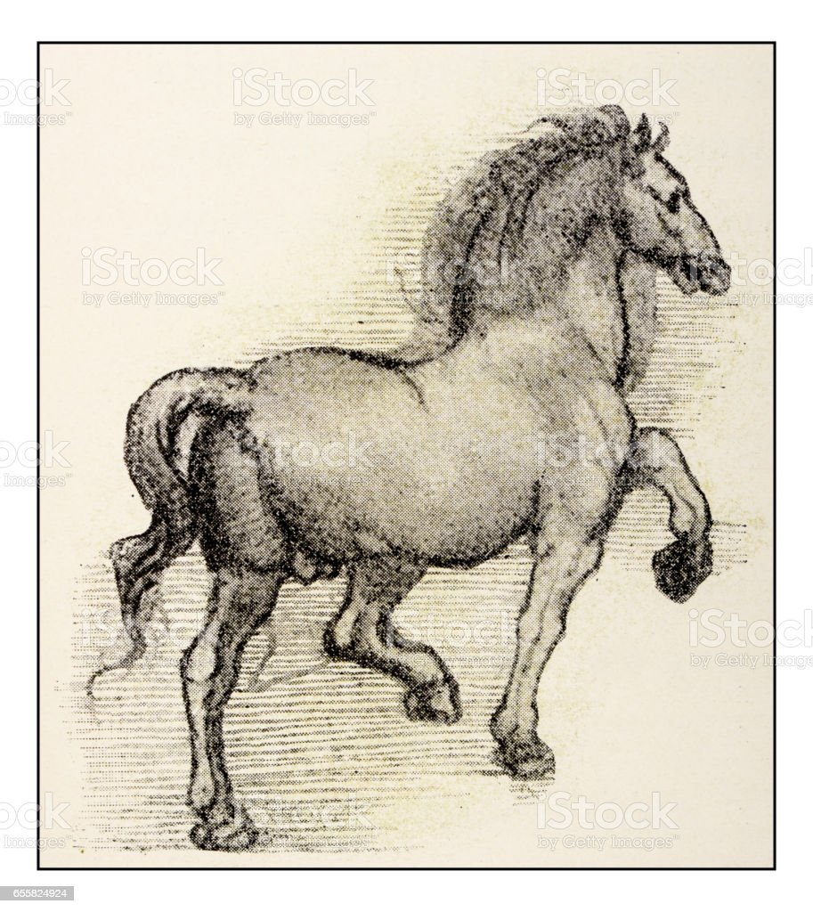 Leonardos Sketches And Drawings Horse Stock Illustration Download Image Now Istock