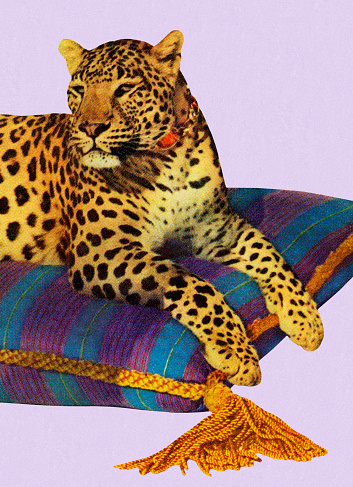 Leopard Resting On Pillow